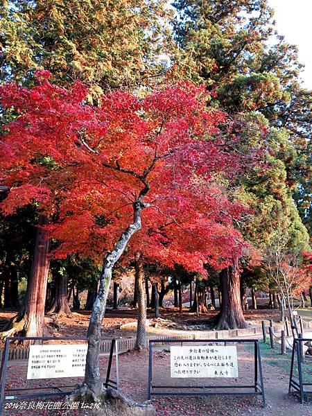 2014京阪神紅葉季 422