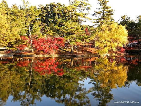 2014京阪神紅葉季 379