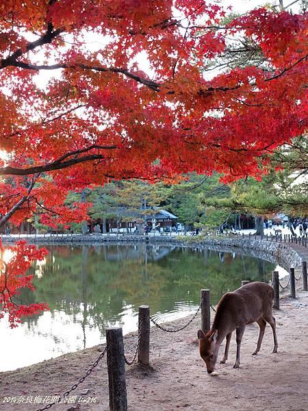 2014京阪神紅葉季 434