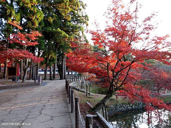 2014京阪神紅葉季 442