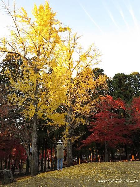2014京阪神紅葉季 450