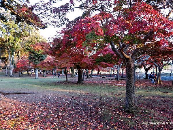 2014京阪神紅葉季 459_副本