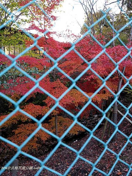 2014京阪神紅葉季 514