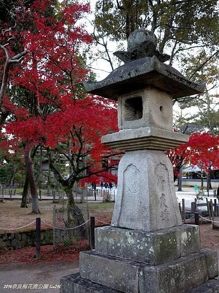 2014京阪神紅葉季 486