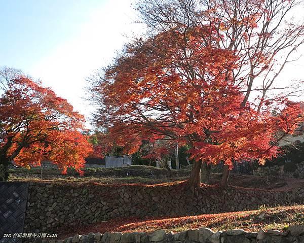 2014京阪神紅葉季 619