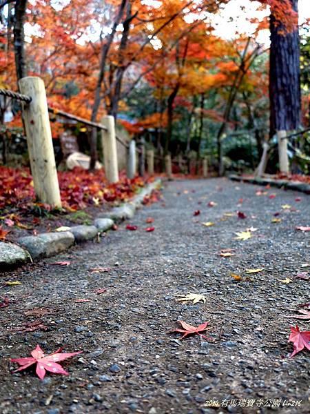2014京阪神紅葉季 674