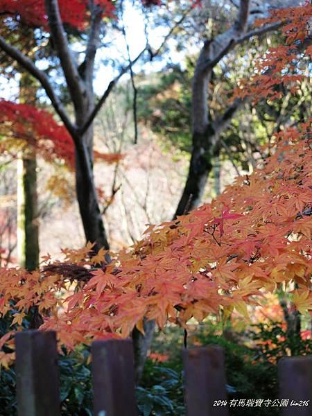 2014京阪神紅葉季 630