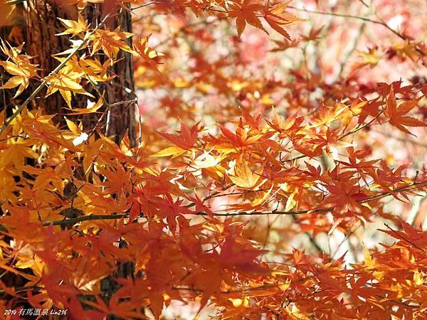 2014京阪神紅葉季 720_副本