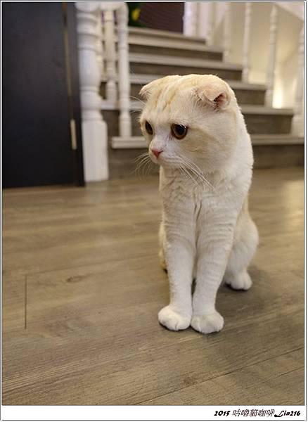 2015咕嚕貓咖啡 (68)