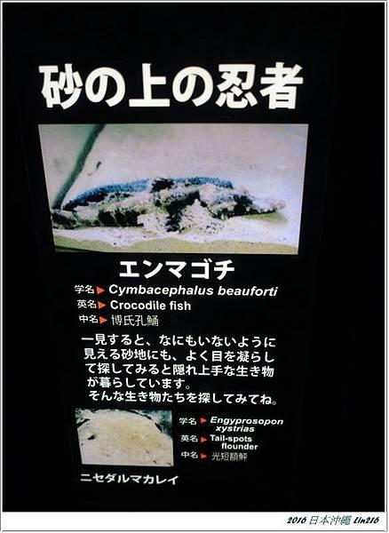 2016日本沖繩 204