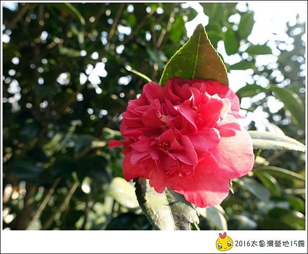 2016春陽部落太魯灣 (42)