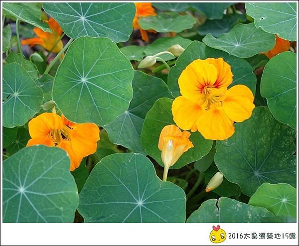 2016春陽部落太魯灣 (72)