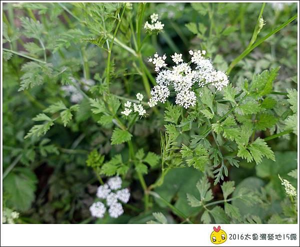 2016春陽部落太魯灣 (90)