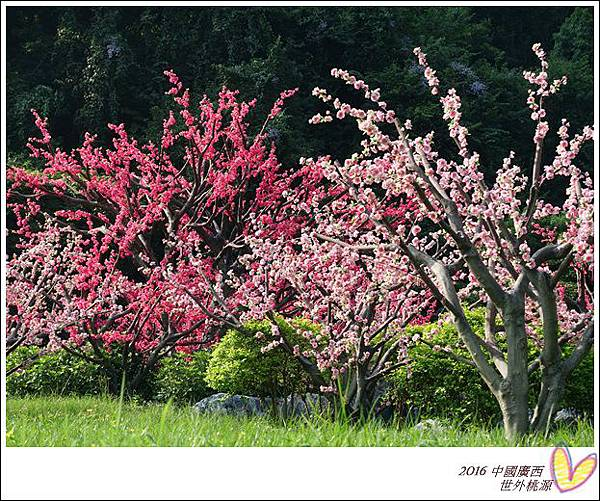 2016九月桂林陽朔 424
