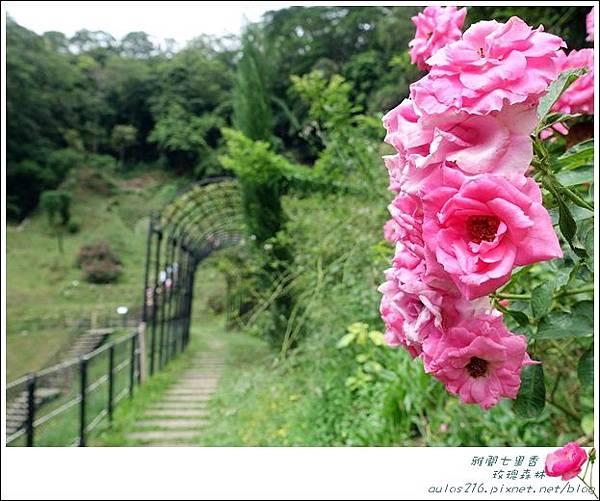 雅聞七里香玫瑰森林 (85)