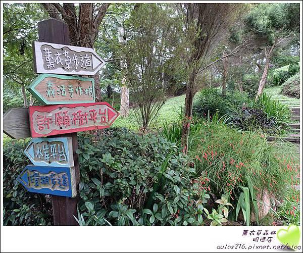 明德薰衣草森林 (138)