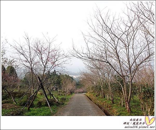 2017鹿谷 (150)