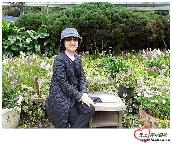 梅峰農場 (32)_副本