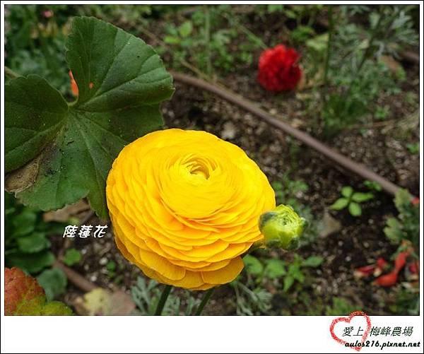 梅峰農場 (22)-1