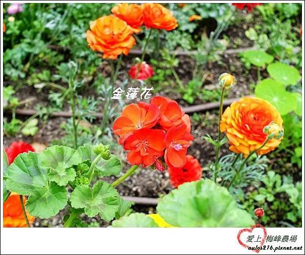 梅峰農場 (18)-1