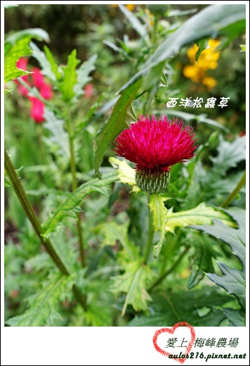 梅峰農場 (150)-1