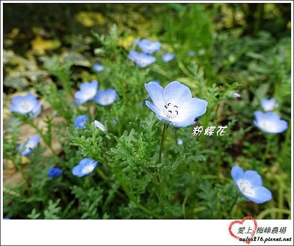 梅峰農場 (133)-3