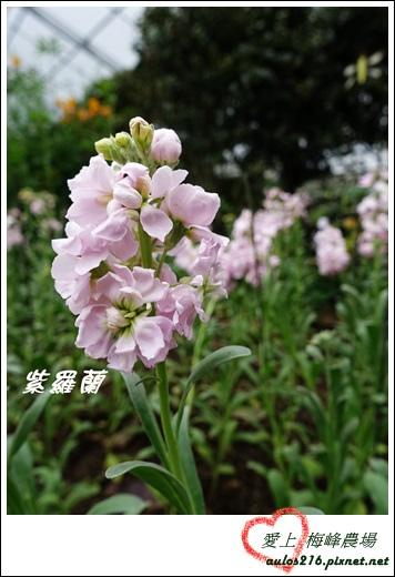 梅峰農場 (78)-1