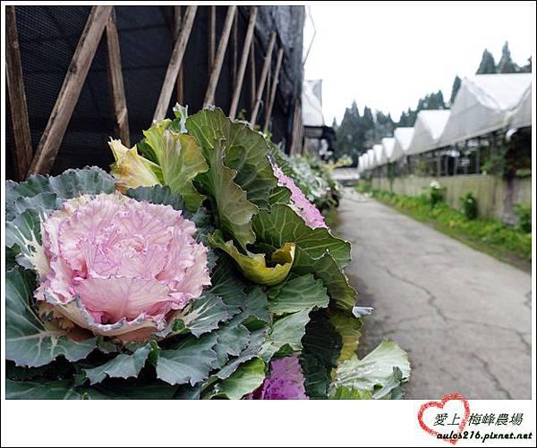 梅峰農場 (159)