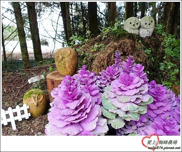 梅峰農場 (65)