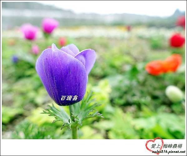 梅峰農場 (280)-1
