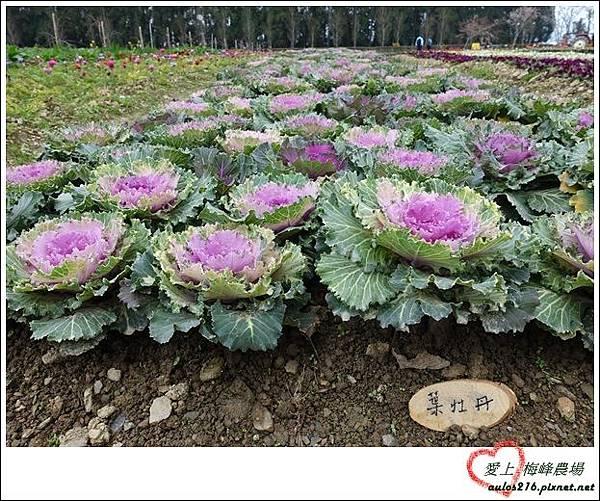 梅峰農場 (292)