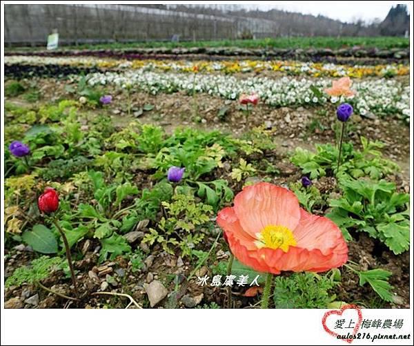 梅峰農場 (285)