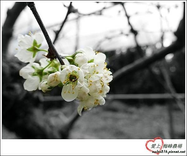 梅峰農場 (218)_副本