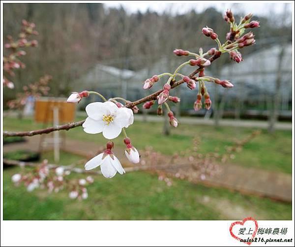 梅峰農場 (268)