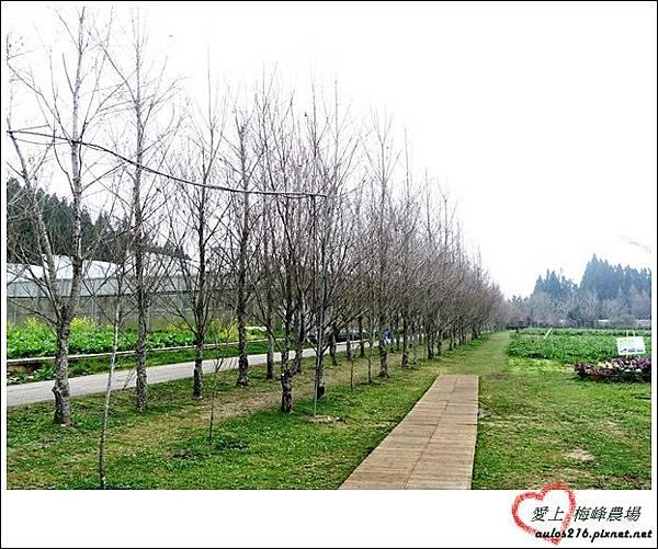 梅峰農場 (260)