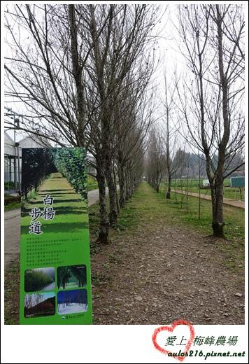 梅峰農場 (255)