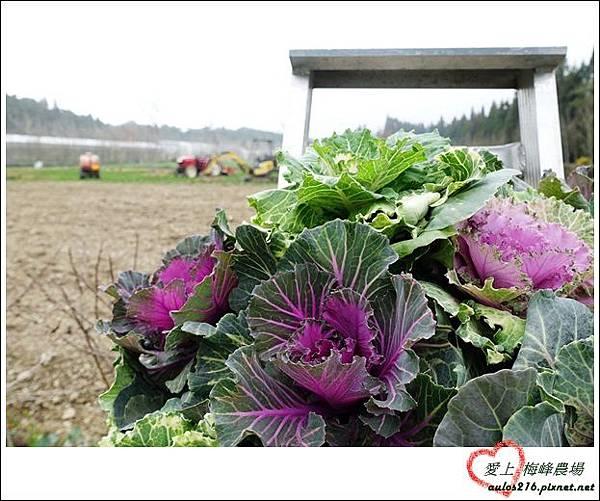 梅峰農場 (251)