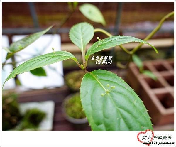 梅峰農場 (331)-1