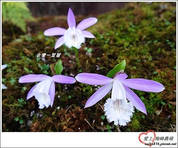 梅峰農場 (364)-2