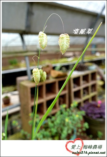 梅峰農場 (356)