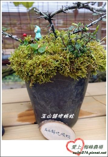 梅峰農場 (317)