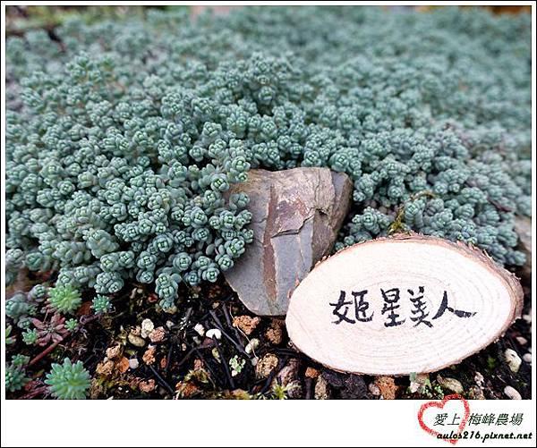 梅峰農場 (346)