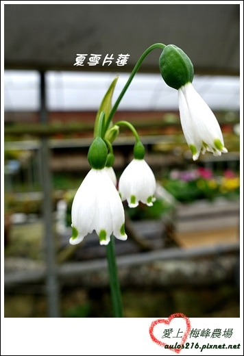 梅峰農場 (386)-1
