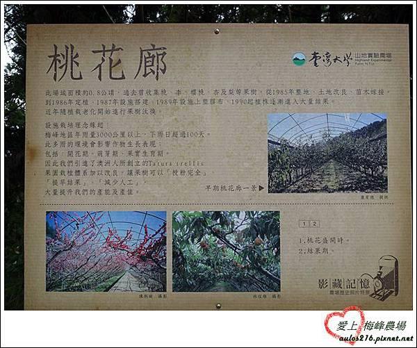 梅峰農場 (442)