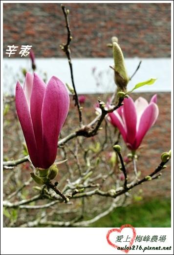 梅峰農場 (432)-1