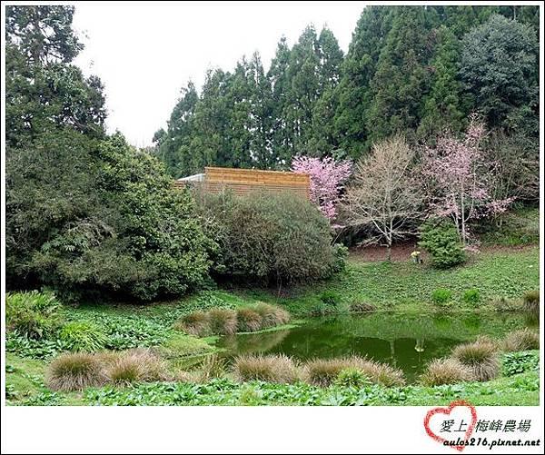 梅峰農場 (1)