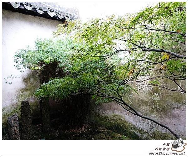 西塘古鎮 (220)