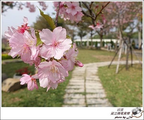 3月葳立機電賞櫻 (265)