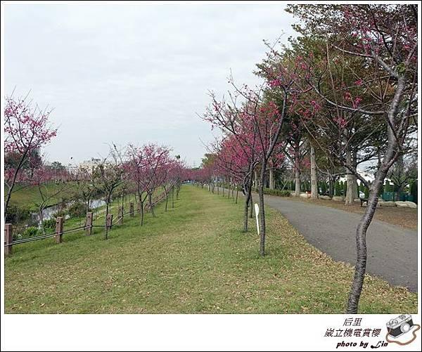 3月葳立機電賞櫻 (25)
