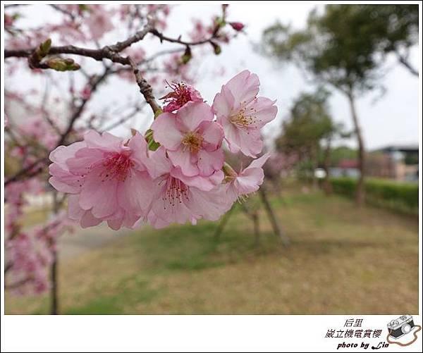 3月葳立機電賞櫻 (78)